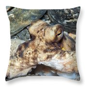 Atlantic Octopus In Shell Debris Throw Pillow