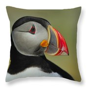 Atlantic Puffin Portrait Throw Pillow