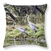 Australian Cranes At The Billabong Throw Pillow