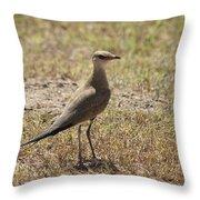 Australian Pratincole Throw Pillow
