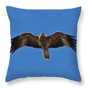 Australian Sea Eagle Throw Pillow
