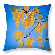 Autumn Aspen Leaves And Blue Sky Throw Pillow