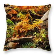 Autumn Ferns On Pickle Creek At Hawn State Park Throw Pillow
