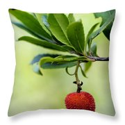 Autumn Fruits In Red Throw Pillow