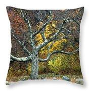 Autumn Grandfather Tree 2 Throw Pillow