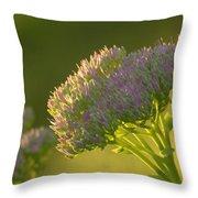 Autumn Joy Sedum Throw Pillow