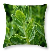 Autumn Joy Stonecrop Throw Pillow