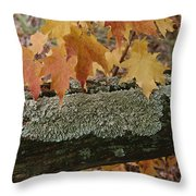 Autumn Leaves And A Lichen-covered Log Throw Pillow