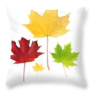 Autumn Leaves Isolated Throw Pillow