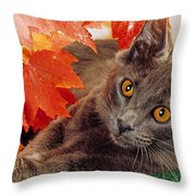 Autumn Reds And Ambers Throw Pillow