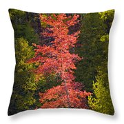 Autumn Scene Of Colorful Red Tree Along The Little Manistee River In Michigan No. 0902 Throw Pillow