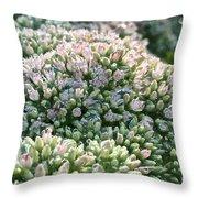 Autumn Stonecrop Throw Pillow