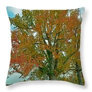Autumn Sweetgum Tree Throw Pillow