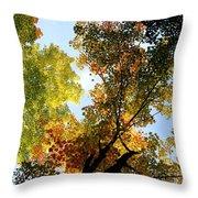 Autumn Trees Low-angle Throw Pillow