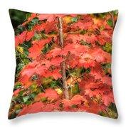 Autumnal Acer Throw Pillow