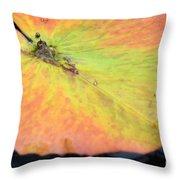 Autumn's Pastel Pallet Throw Pillow