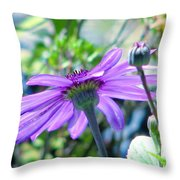 Avatar's Pericallis Throw Pillow by Rory Sagner