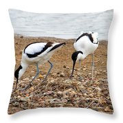 Avocets At Nest Throw Pillow