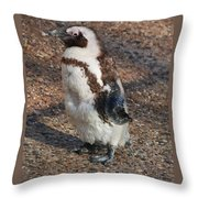 Baby African Penguin Throw Pillow