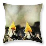 Baby Birds Throw Pillow by Darren Fisher