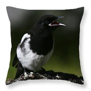 Baby Blackbilled Magpie Throw Pillow