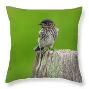 Baby Bluebird On Post Throw Pillow