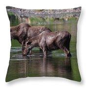 Baby Bulls Throw Pillow