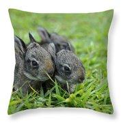 Baby Bunnies Throw Pillow