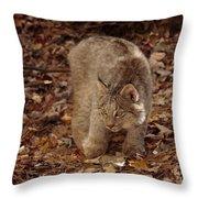 Baby Canada Lynx Stalking A Squirrel Throw Pillow
