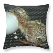 Baby Chick Resting  Throw Pillow