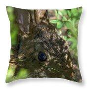 Baby Eastern Cottontail Rabbit Dmam011 Throw Pillow