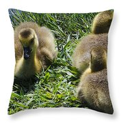 Baby Geese Throw Pillow