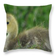 Baby Goose Takes A Break Throw Pillow