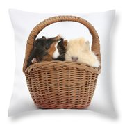 Baby Guinea Pigs In A Wicker Basket Throw Pillow