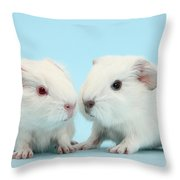 Baby Guinea Pigs Throw Pillow