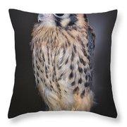 Baby Kestrel Falcon Throw Pillow