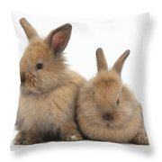 Baby Lionhead Rabbits Throw Pillow