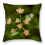Baby Queen Anne's Lace Throw Pillow