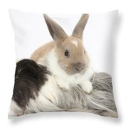 Baby Rabbit And Long-haired Guinea Pig Throw Pillow