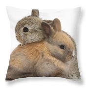 Baby Rabbits Throw Pillow