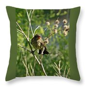 Baby Red Wing Black Bird Calling For Mother Throw Pillow
