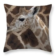 Baby Rothschild Giraffe  Throw Pillow