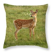 Baby Whitetail Fawn In A Spring Meadow Throw Pillow
