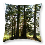 Back Lit Trees Throw Pillow