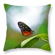 Backlit Butterfly Throw Pillow