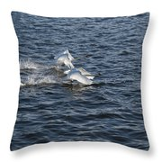 Backlit Swans Throw Pillow
