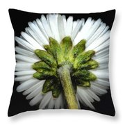 Backside Of A Daisy Flower Throw Pillow
