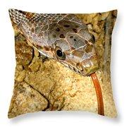 Bairds Rat Snake Tongue Flick Throw Pillow