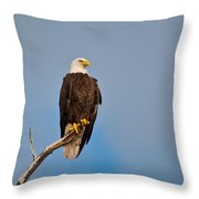 Bald Eagle - Symbol Of Justice Throw Pillow
