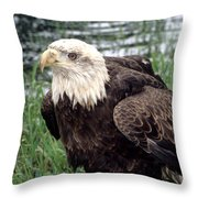 Bald Eagle At Riverside  Throw Pillow